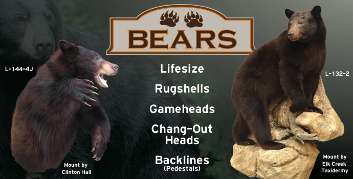 Bear Collections