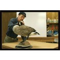 MOUNTING A STANDING CANADIAN GOOSE W/ STEFAN
