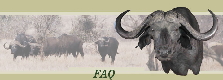 Research Mannikins Taxidermy Supplies: Frequently Asked Questions