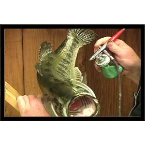 Painting A Large Mouth Bass W Bill Leach Research Mannikins Taxidermy Supplies