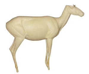 ANTELOPE LIFESIZE SLIGHT RT STANDING