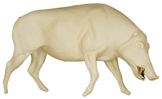 WILD BOAR LIFESIZE WALKING NON-DETAIL JAW