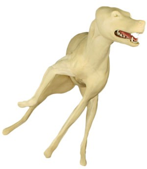 COYOTE LIFESIZE LT RUNNING HEAD UP