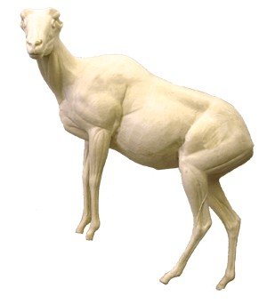 DESERT BIGHORN LIFESIZE LT FRONT ELEVATED