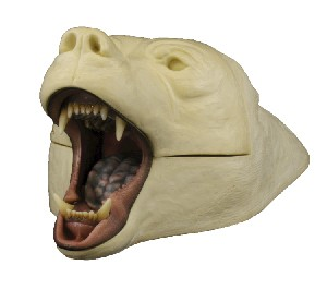 GRIZZLY BEAR RUGSHELL WITH JAW CUP