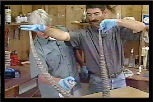 STAINING REPRODUCTION HORNS W/ ERICH CARTER