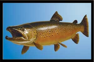 PAINTING A BROWN TROUT W/ BILL LEACH