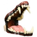 MED WOLF DETAILED HINGED JAWS