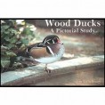 WOOD DUCKS PICTORIAL
