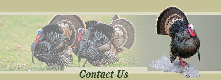 Research Mannikins Taxidermy Supplies: Contact Us