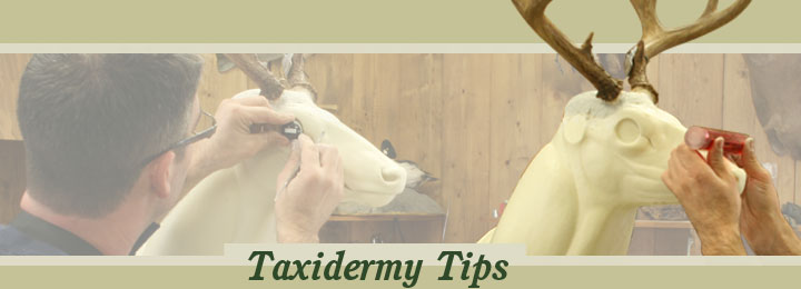 Research Mannikins Taxidermy Supplies: TaxidermyTips
